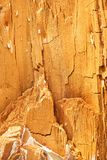 Natural texture. Heartwood Royalty Free Stock Photography