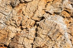 Natural texture. Old wood of felled tree Stock Photography