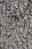 Natural texture of pine bark Royalty Free Stock Photo