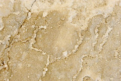 Natural texture of rock. Natural texture of authentic Italian travertine rock. Perfect for use as Photoshop layer Stock Image