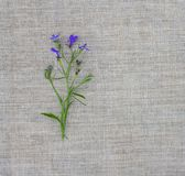 Natural texture with small bouquet of violet flowers. Natural fabric rough background. Natural linen texture with small bouquet of violet flowers. Natural stock photography