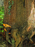 Natural texture of a tree. In the forest Royalty Free Stock Photography
