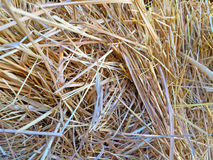Natural texture of wheat straw. On summertime royalty free stock image
