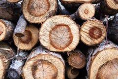 Natural textured background of timber log, pile of various wood log.  stock photo