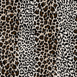 Natural textured leopard skin
