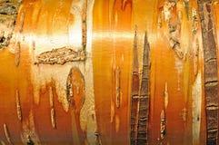 Natural textured wooden background of bird cherry tree bark Stock Photo