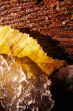 Natural textures. Beautiful late autumn forest scene: tree skin, golden leaf and ice Stock Photography