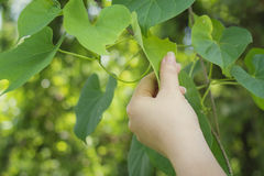 Natural Touch. Study plant for environment Stock Image