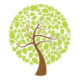 Natural Tree Stock Photography