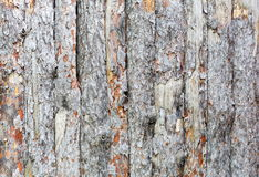 Natural tree bark plank texture background Stock Images