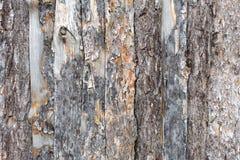Natural tree bark plank texture background Stock Photo