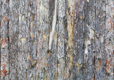 Natural tree bark plank texture background stock image