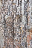 Natural tree bark plank texture background Stock Photography