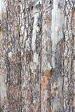 Natural tree bark plank texture background Stock Photos