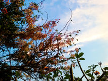 Natural tree in garden. Looking into sky background Royalty Free Stock Photo