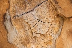Natural tree pattern wood texture. Aged bark. Years concentric circles Stock Photography