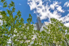 Natural tree and tall sky scrapers in Chicago Royalty Free Stock Image