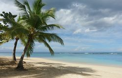 Natural Tropical beach Royalty Free Stock Images