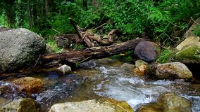 Natural tropical stream scene. Natural tropical stream with a log over the channel with many rocks around stock video