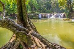 Natural trunk of big old tree in Namtok Chet Sao Noi waterfall Stock Photos