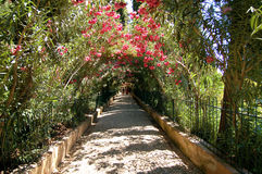 Natural Tunnel created with flowers and branches Royalty Free Stock Photos