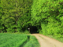 Trail into green forest at spring Stock Image