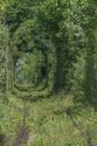 Natural tunnel of love formed by trees. In Romania Royalty Free Stock Photos