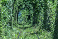 Natural tunnel of love formed by trees. In Romania Royalty Free Stock Photo
