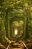 Natural tunnel of love formed by trees Stock Photo