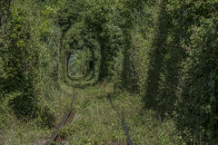 Natural. Tunnel of love formed by treesin Romania Stock Image
