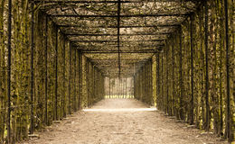 Tunnel of love. A natural tunnel in the park of Hingene (Belgium), suggestion hope at the end of a tunnel Stock Photography