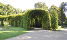 Natural tunnel from Sanssouci in Potsdam,Germany royalty free stock photography
