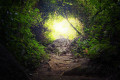 Natural tunnel in tropical jungle forest Royalty Free Stock Image