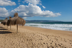 Natural umbrellas on beach Royalty Free Stock Photography