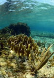 Natural underwater seascape with gorgonian Royalty Free Stock Photo