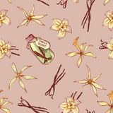Natural vanilla spice seamless pattern. Exotic asian spice for dessert or parfum industry vector illustration. Vanilla flower sticks, leaves and extract oil Royalty Free Stock Image