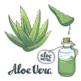 Natural Vector Aloe vera illustration  objects Stock Image