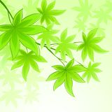 Natural vector background with green spring leaves Stock Photos