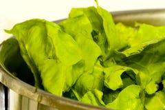 Natural vegetables Stock Images