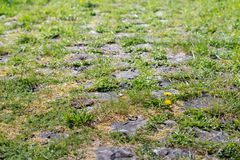 Natural vegetation between cobblestones. On the top of a Dutch dike on a sunny day in the spring season Stock Photo