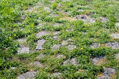 Natural vegetation between cobblestones. On the top of a Dutch dike on a sunny day in the spring season Royalty Free Stock Photography