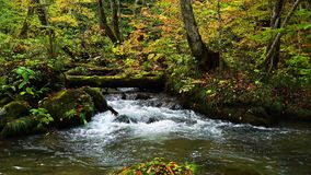 Natural view of autumn color destination at Oirase Gorge
