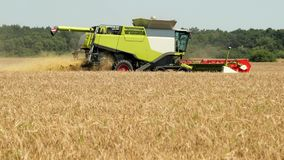 Natural View Of Combine Harvester Gathering Ripe Wheat At Sunny Day On The Background Of Rural Countryside. Harvesting stock video footage