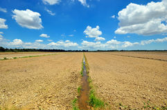 Natural View Of Paddy Field Stock Photography