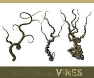 Natural vines Royalty Free Stock Photos