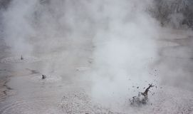 A natural volcanic mud pool at the Wai-O-Tapu geothermal park in New Zealand royalty free stock photography