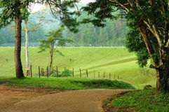 Natural-walkway countryside, North of Thailand. stock photo