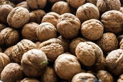 Walnut background texture royalty free stock photography