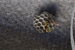 Wasp nest. A natural wasp nest in a roof stock photo