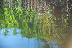 Natural water background with yellow, green and white plants in reflection of the surface. Natural water background with yellow, green and white plants and blue Royalty Free Stock Photo